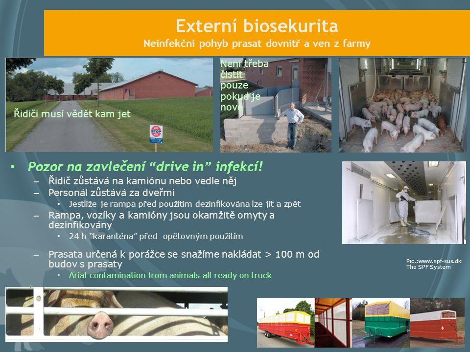 Externí biosekurita Neinfekční pohyb prasat dovnitř a ven z farmy Pozor na zavlečení drive in infekcí.