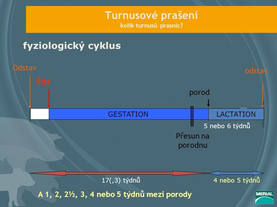 Turnusové prašení kolik turnusů prasnic? fyziologický cyklus GESTATION Říje porod Přesun na porodnu Odstav odstav LACTATION 17(,3) týdnů4 nebo 5 týdnů