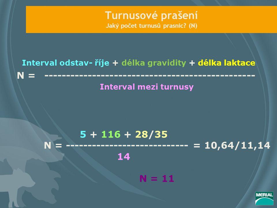 Turnusové prašení Jaký počet turnusů prasnic? (N) Interval odstav- říje + délka gravidity + délka laktace N = ----------------------------------------