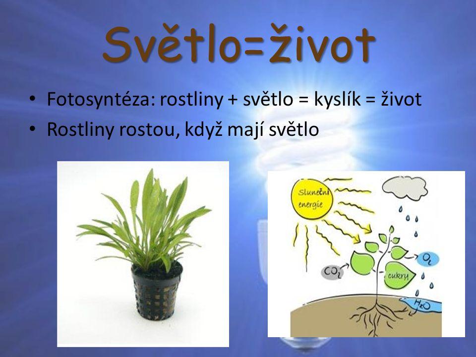 Světlo=život Fotosyntéza: rostliny + světlo = kyslík = život Rostliny rostou, když mají světlo