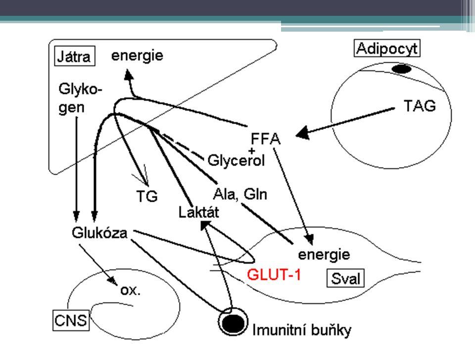 Metabolická reakce na stres III.