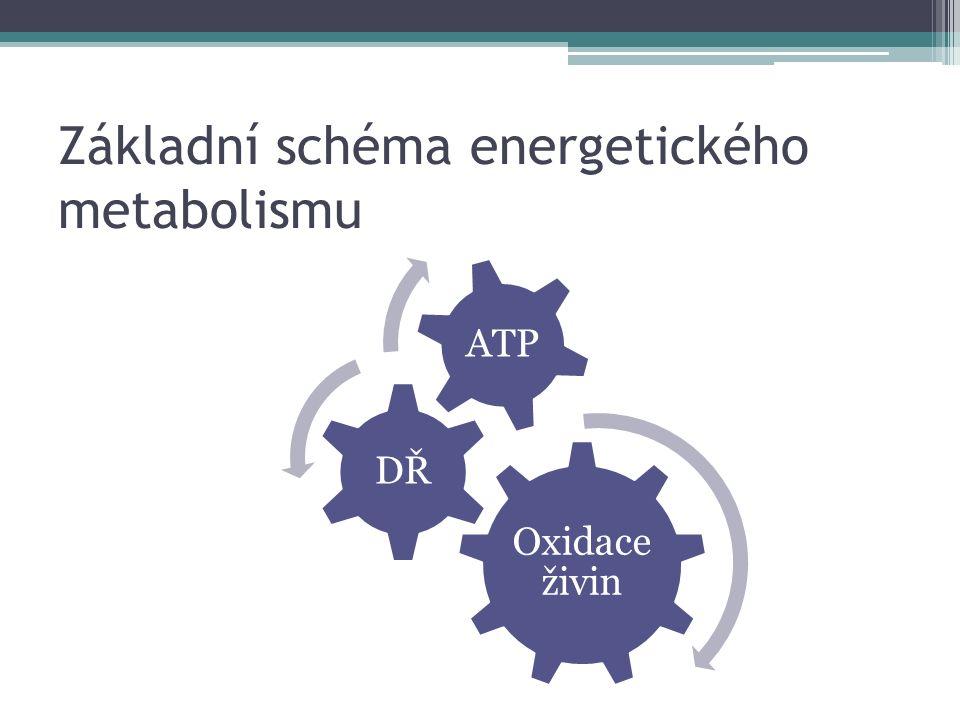 Základní schéma energetického metabolismu Oxidace živin DŘ ATP