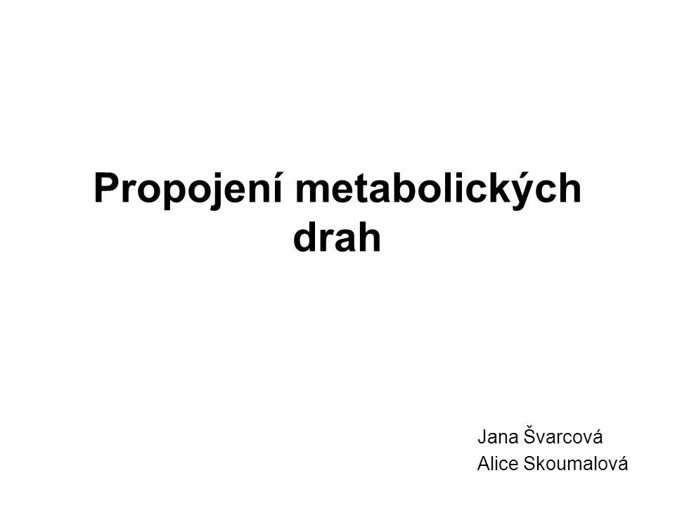 Propojení metabolických drah Jana Švarcová Alice Skoumalová