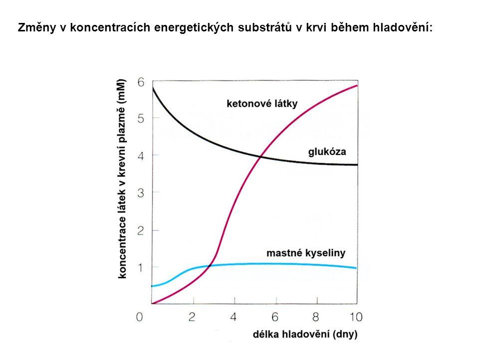 Změny v koncentracích energetických substrátů v krvi během hladovění: