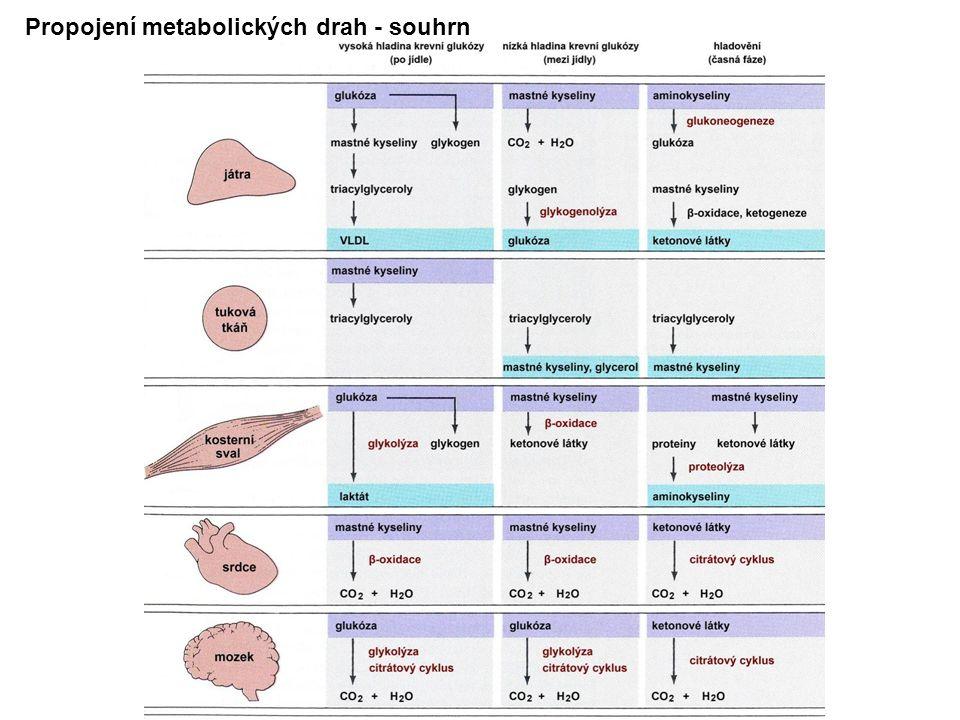 Propojení metabolických drah - souhrn