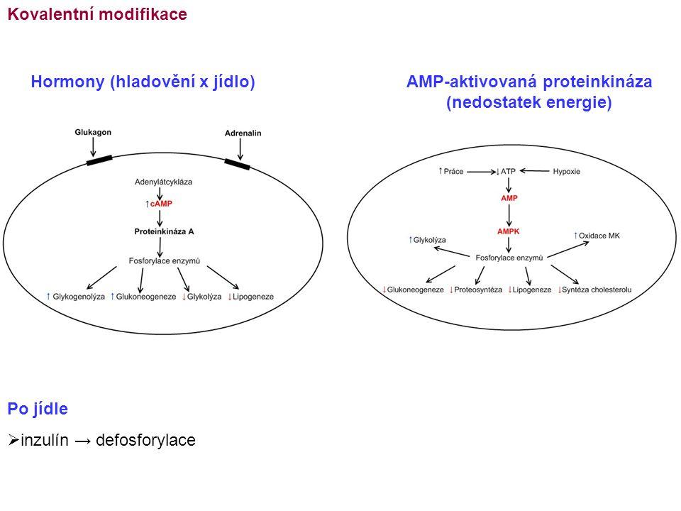 Kovalentní modifikace Po jídle  inzulín → defosforylace Hormony (hladovění x jídlo)AMP-aktivovaná proteinkináza (nedostatek energie)