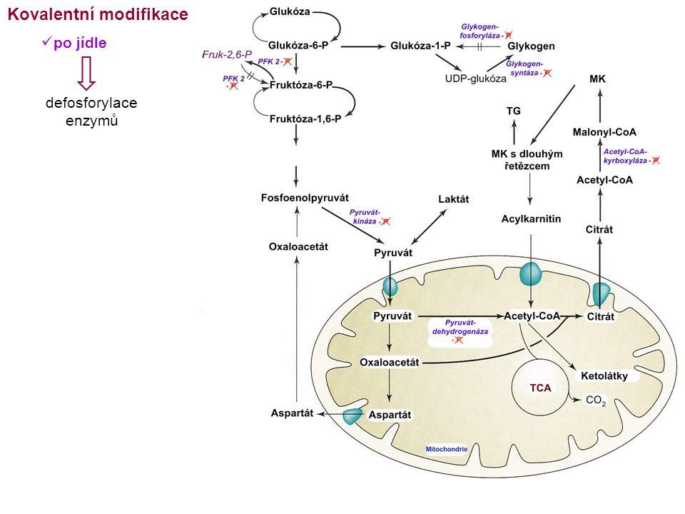 Kovalentní modifikace po jídle defosforylace enzymů