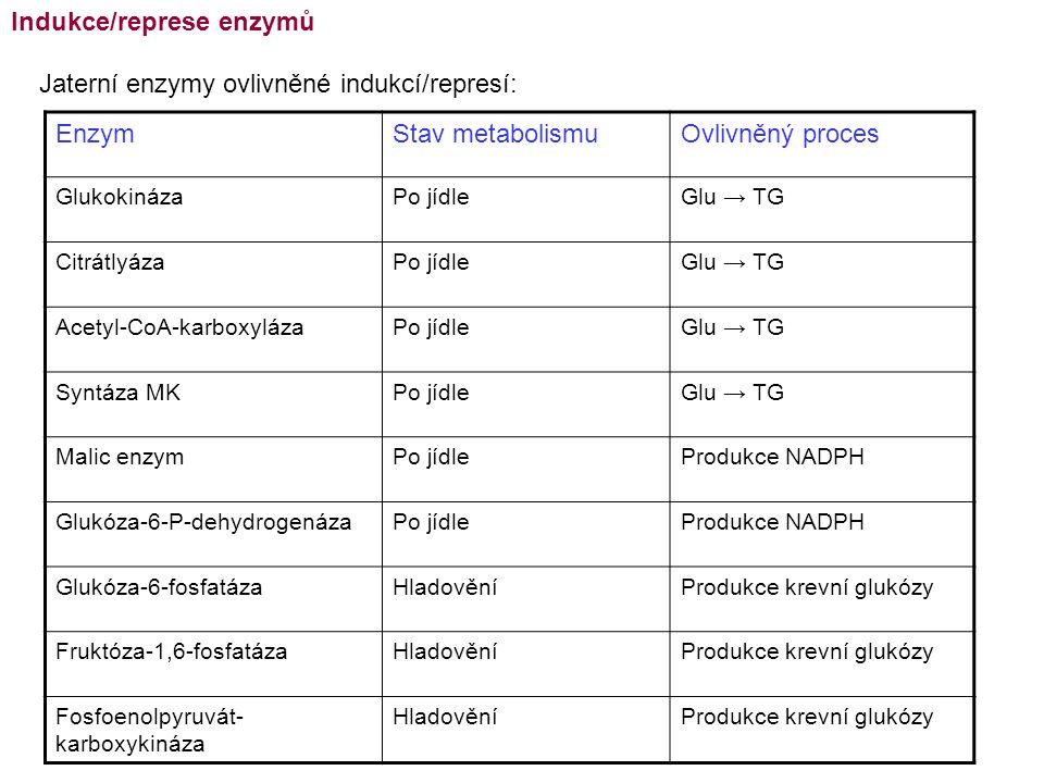 EnzymStav metabolismuOvlivněný proces GlukokinázaPo jídleGlu → TG CitrátlyázaPo jídleGlu → TG Acetyl-CoA-karboxylázaPo jídleGlu → TG Syntáza MKPo jídl