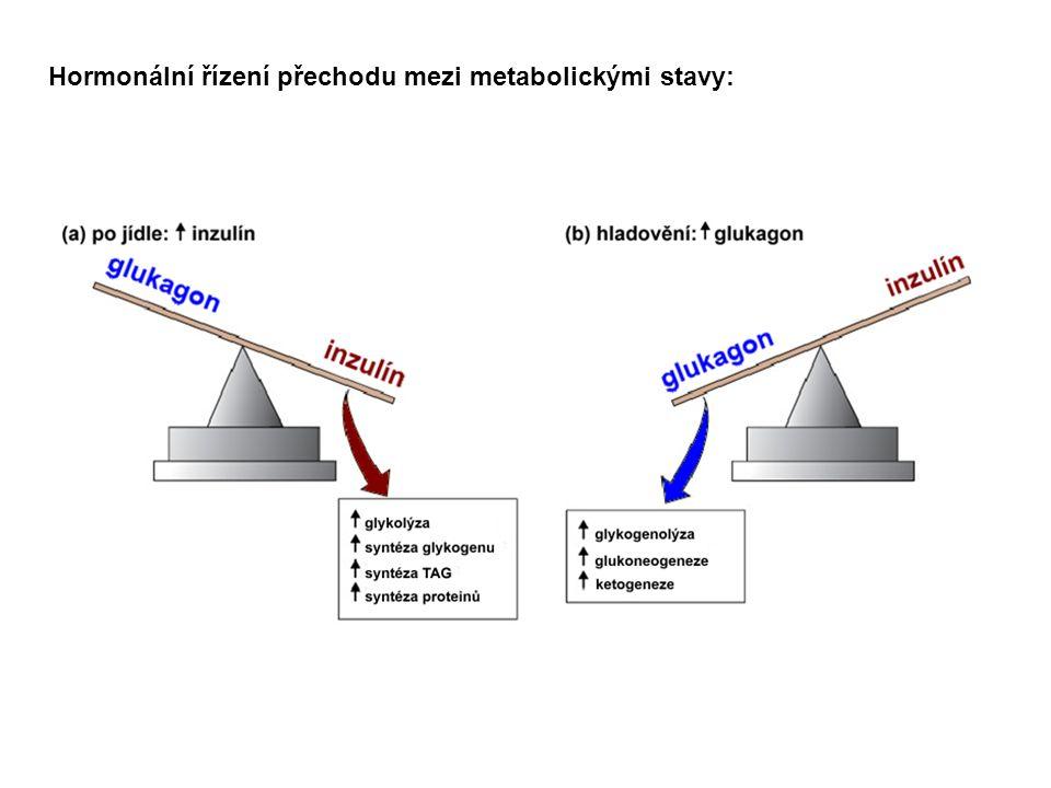 Hormonální řízení přechodu mezi metabolickými stavy: