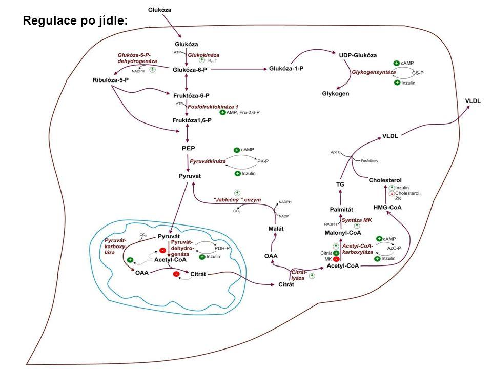 Metabolické změny u nízkosacharidové ketogenní diety: Játra zůstávají glukogenní a ketogenní i po jídle AK jsou konvertovány na glukózu, glykogen, ketolátky Neodbourávají se svalové proteiny