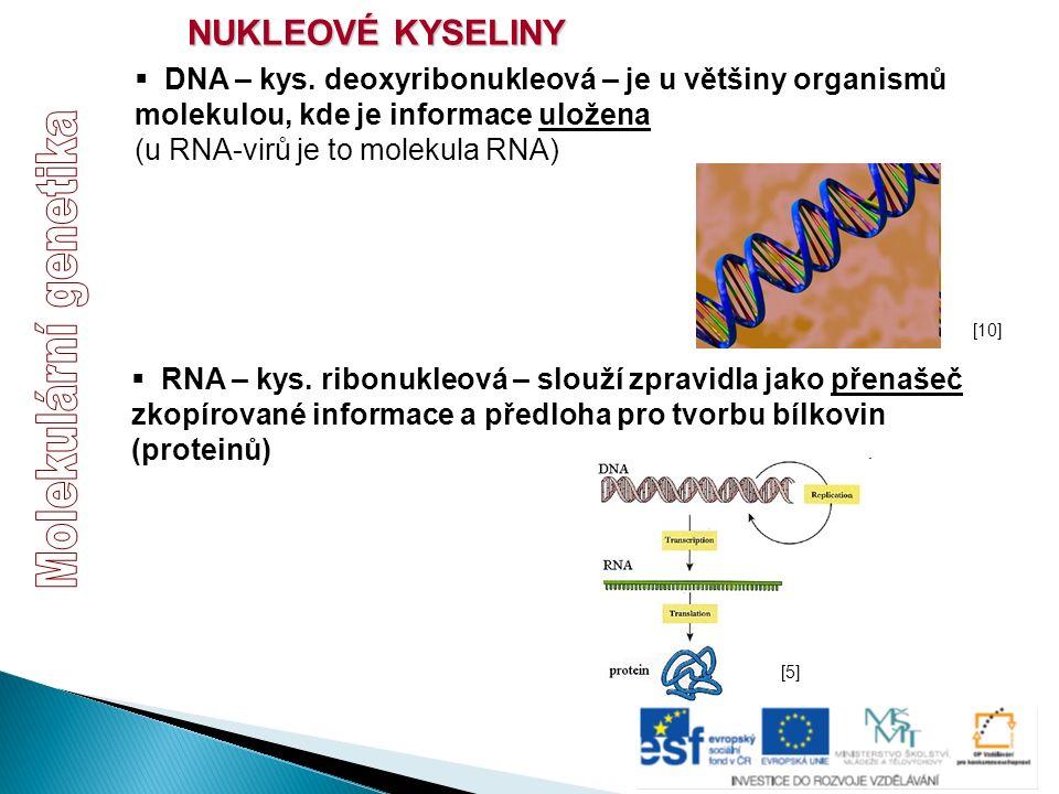  DNA – kys. deoxyribonukleová – je u většiny organismů molekulou, kde je informace uložena (u RNA-virů je to molekula RNA)  RNA – kys. ribonukleová