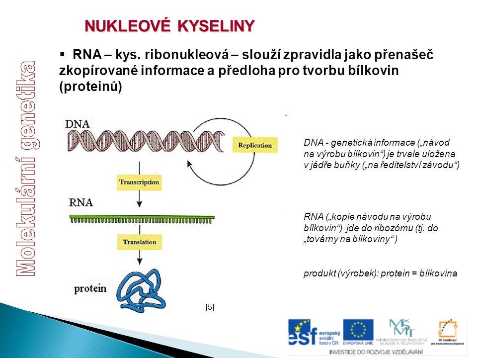 NUKLEOVÉ KYSELINY  RNA – kys. ribonukleová – slouží zpravidla jako přenašeč zkopírované informace a předloha pro tvorbu bílkovin (proteinů) [5][5] DN