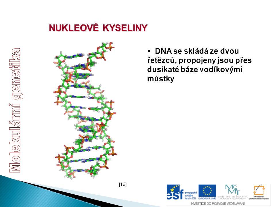 NUKLEOVÉ KYSELINY  DNA se skládá ze dvou řetězců, propojeny jsou přes dusíkaté báze vodíkovými můstky [16]