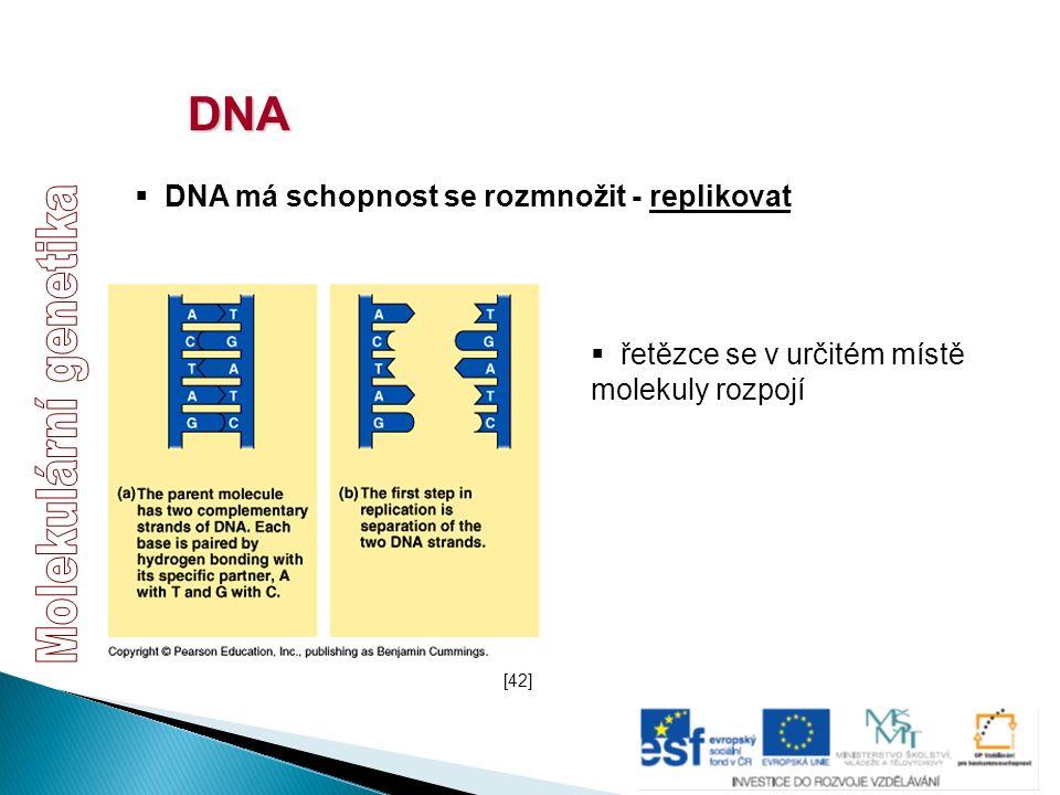 DNA  DNA má schopnost se rozmnožit - replikovat  řetězce se v určitém místě molekuly rozpojí [42]