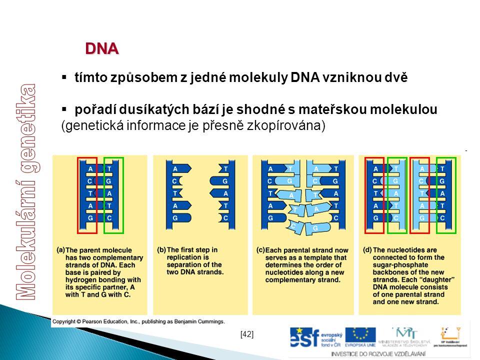DNA  tímto způsobem z jedné molekuly DNA vzniknou dvě  pořadí dusíkatých bází je shodné s mateřskou molekulou (genetická informace je přesně zkopíro