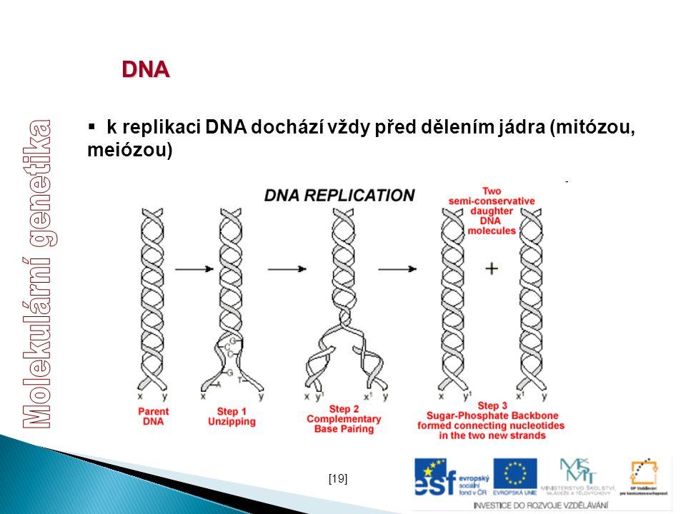 DNA  k replikaci DNA dochází vždy před dělením jádra (mitózou, meiózou) [19]