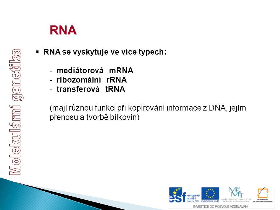 RNA  RNA se vyskytuje ve více typech: - mediátorová mRNA - ribozomální rRNA - transferová tRNA (mají různou funkci při kopírování informace z DNA, je