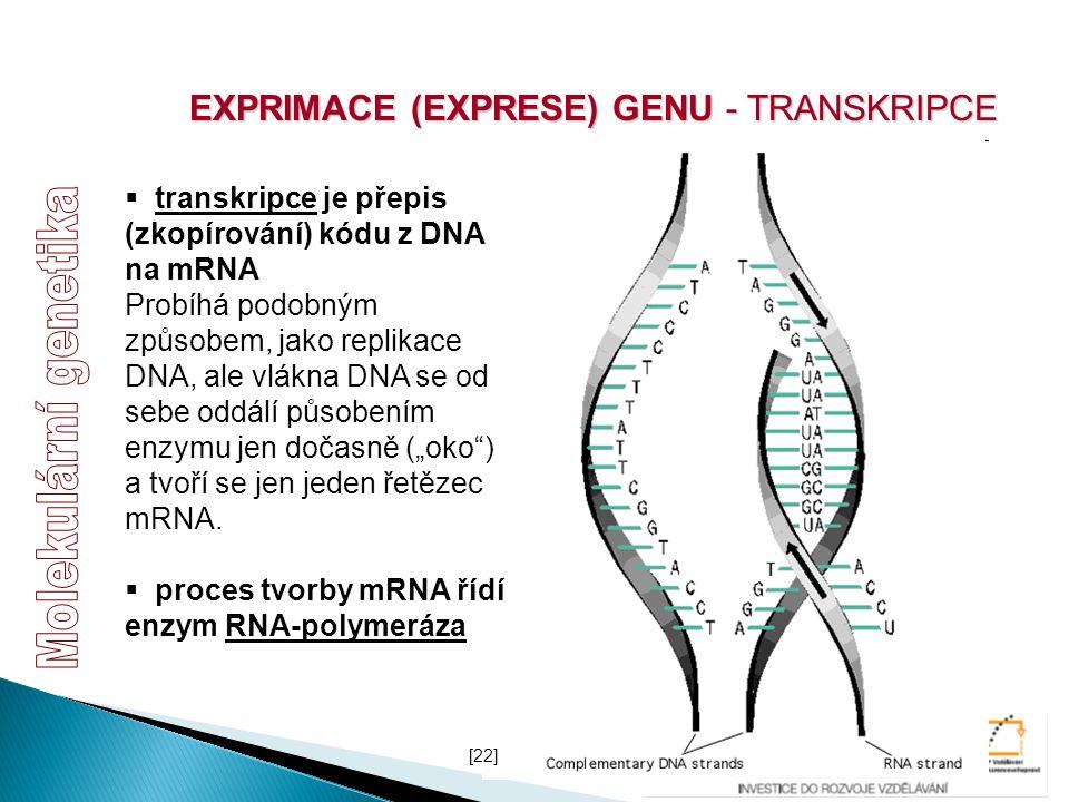 EXPRIMACE (EXPRESE) GENU - TRANSKRIPCE  transkripce je přepis (zkopírování) kódu z DNA na mRNA Probíhá podobným způsobem, jako replikace DNA, ale vlá
