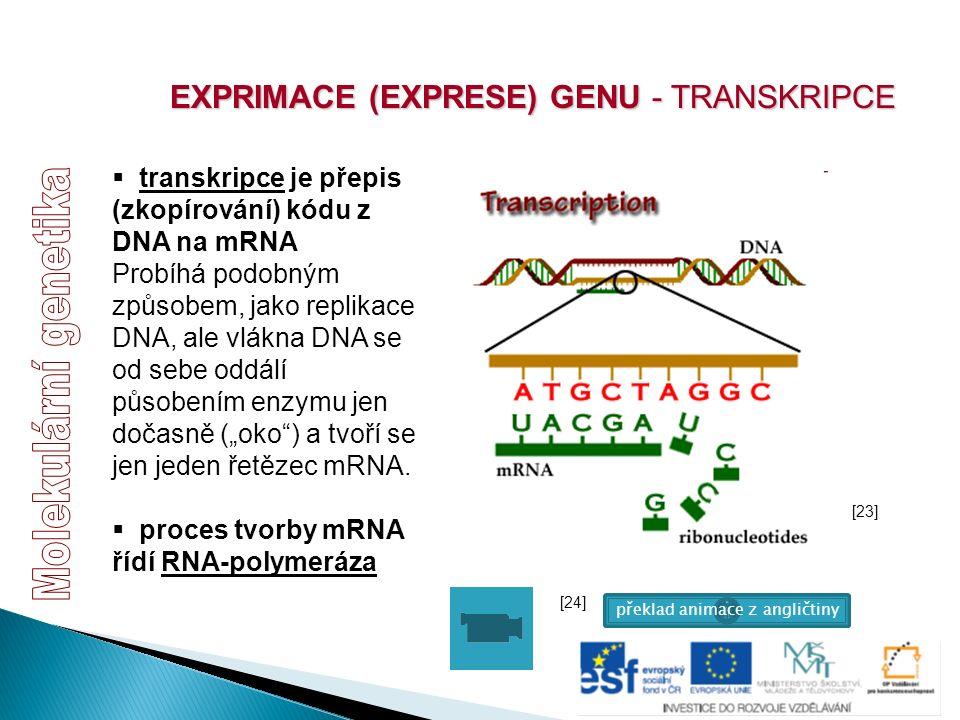  transkripce je přepis (zkopírování) kódu z DNA na mRNA Probíhá podobným způsobem, jako replikace DNA, ale vlákna DNA se od sebe oddálí působením enz