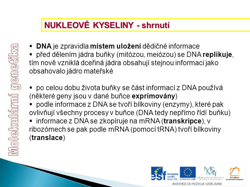  DNA je zpravidla místem uložení dědičné informace  před dělením jádra buňky (mitózou, meiózou) se DNA replikuje, tím nově vzniklá dceřiná jádra obs