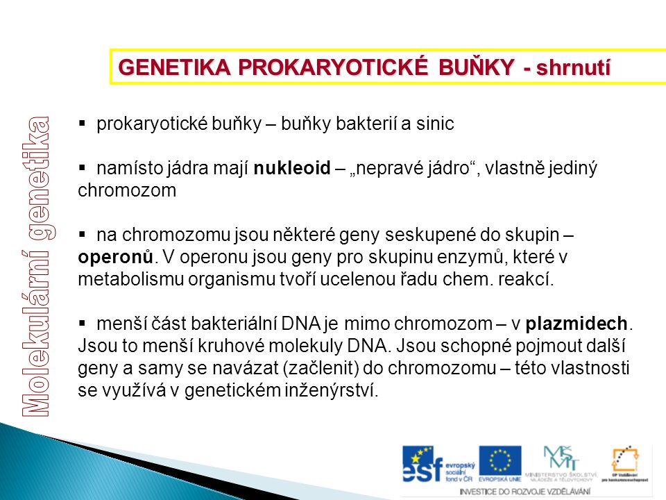 """ prokaryotické buňky – buňky bakterií a sinic  namísto jádra mají nukleoid – """"nepravé jádro"""", vlastně jediný chromozom  na chromozomu jsou některé"""