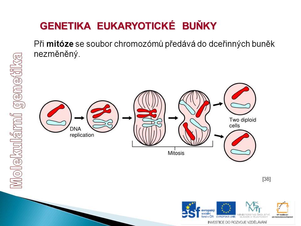 GENETIKA EUKARYOTICKÉ BUŇKY Při mitóze se soubor chromozómů předává do dceřinných buněk nezměněný. [38]