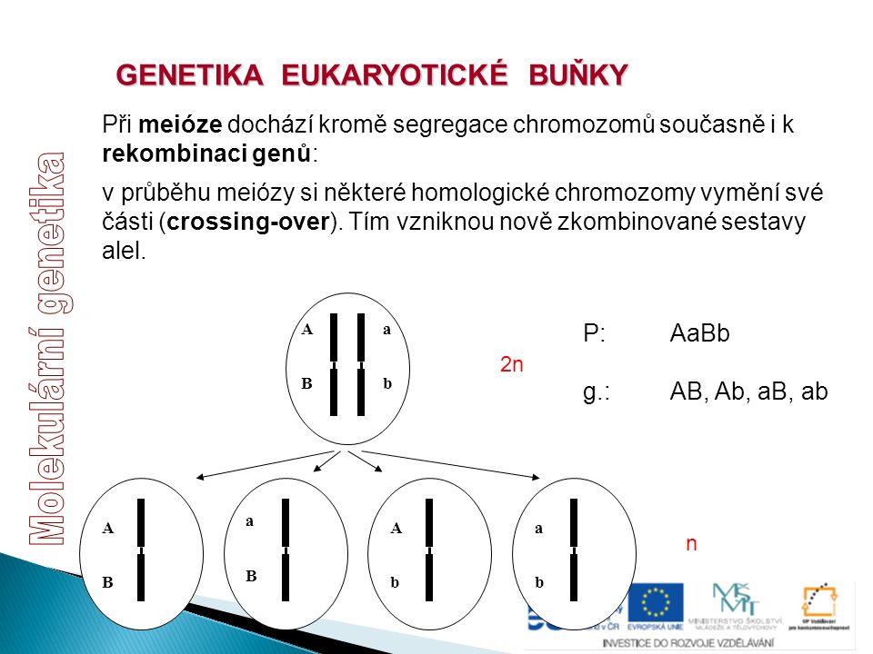 GENETIKA EUKARYOTICKÉ BUŇKY v průběhu meiózy si některé homologické chromozomy vymění své části (crossing-over). Tím vzniknou nově zkombinované sestav