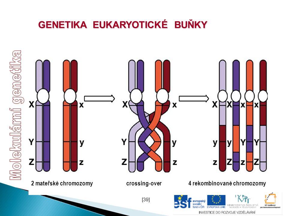 GENETIKA EUKARYOTICKÉ BUŇKY 2 mateřské chromozomycrossing-over4 rekombinované chromozomy [39]