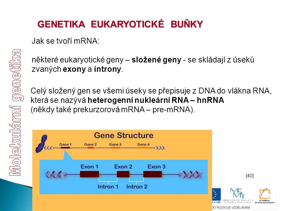 GENETIKA EUKARYOTICKÉ BUŇKY Jak se tvoří mRNA: některé eukaryotické geny – složené geny - se skládají z úseků zvaných exony a introny. Celý složený ge