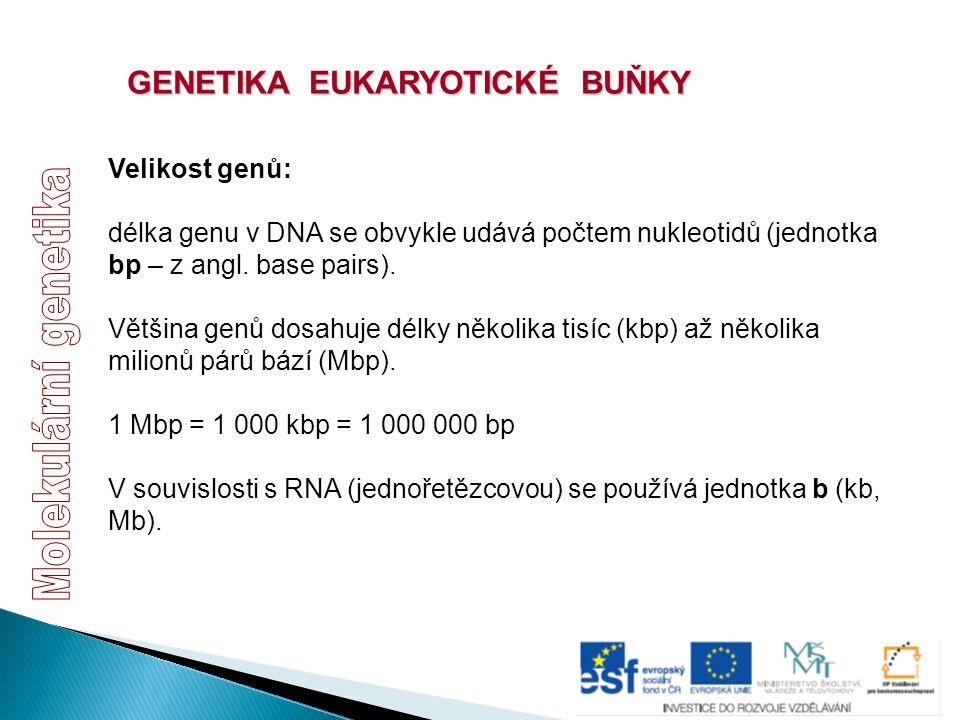 GENETIKA EUKARYOTICKÉ BUŇKY Velikost genů: délka genu v DNA se obvykle udává počtem nukleotidů (jednotka bp – z angl. base pairs). Většina genů dosahu