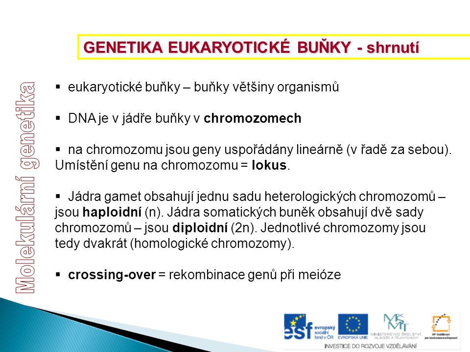  eukaryotické buňky – buňky většiny organismů  DNA je v jádře buňky v chromozomech  na chromozomu jsou geny uspořádány lineárně (v řadě za sebou).