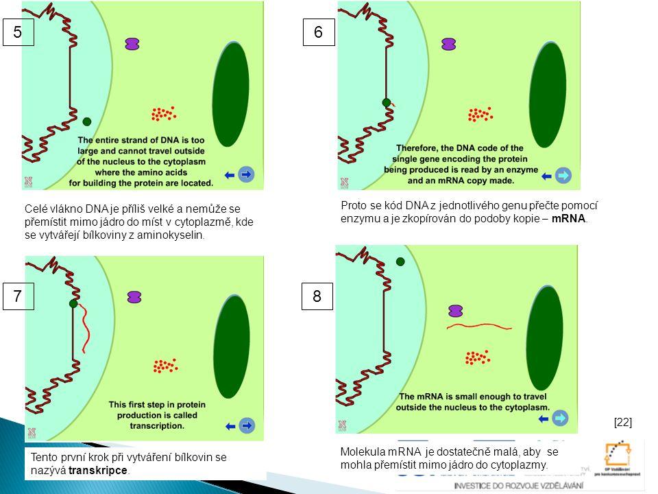 Celé vlákno DNA je příliš velké a nemůže se přemístit mimo jádro do míst v cytoplazmě, kde se vytvářejí bílkoviny z aminokyselin. Proto se kód DNA z j