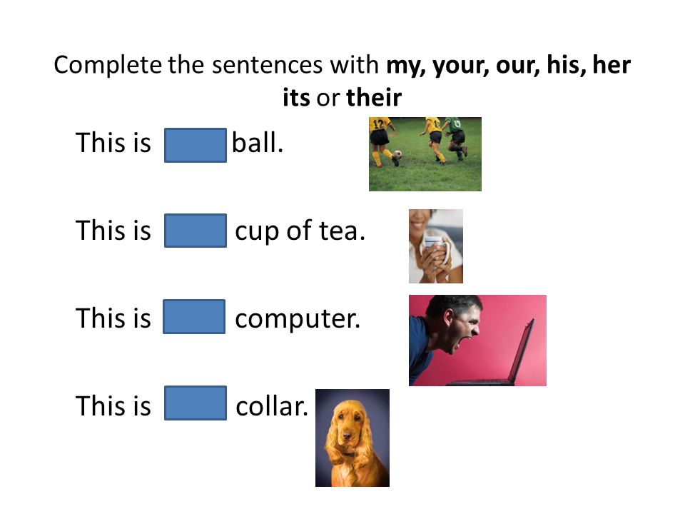 Complete the sentences with my, your, our, his, her its or their This is their ball. This is her cup of tea. This is his computer. This is its collar.