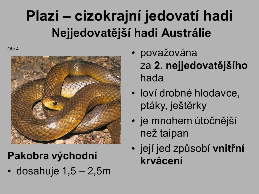 Plazi – cizokrajní jedovatí hadi Nejjedovatější hadi Austrálie považována za 2. nejjedovatějšího hada loví drobné hlodavce, ptáky, ještěrky je mnohem