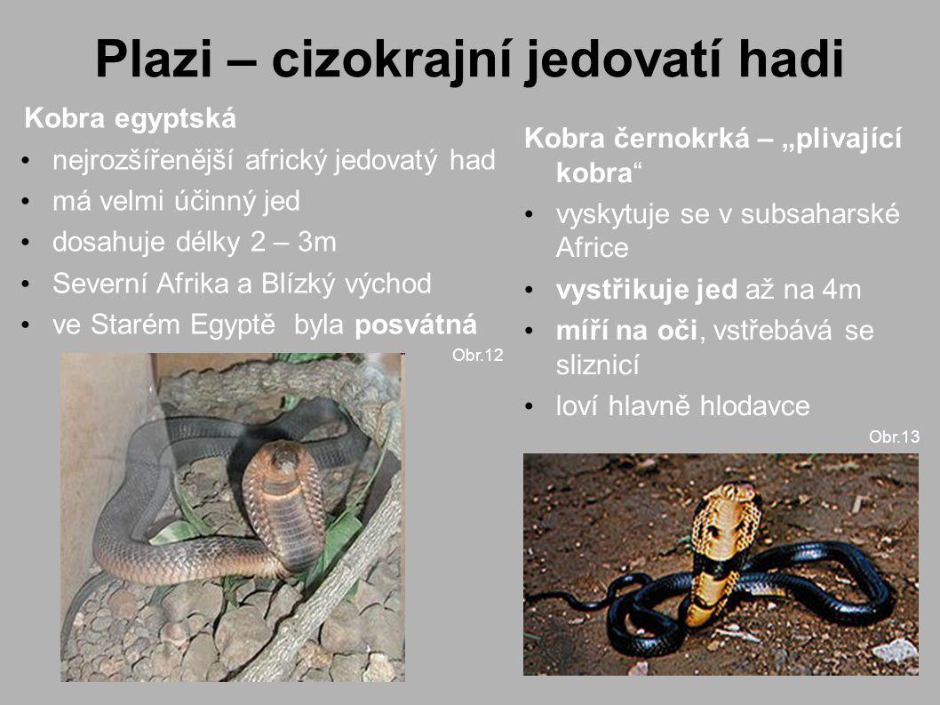 """Plazi – cizokrajní jedovatí hadi Kobra egyptská nejrozšířenější africký jedovatý had má velmi účinný jed dosahuje délky 2 – 3m Severní Afrika a Blízký východ ve Starém Egyptě byla posvátná Obr.12 Kobra černokrká – """"plivající kobra vyskytuje se v subsaharské Africe vystřikuje jed až na 4m míří na oči, vstřebává se sliznicí loví hlavně hlodavce Obr.13"""