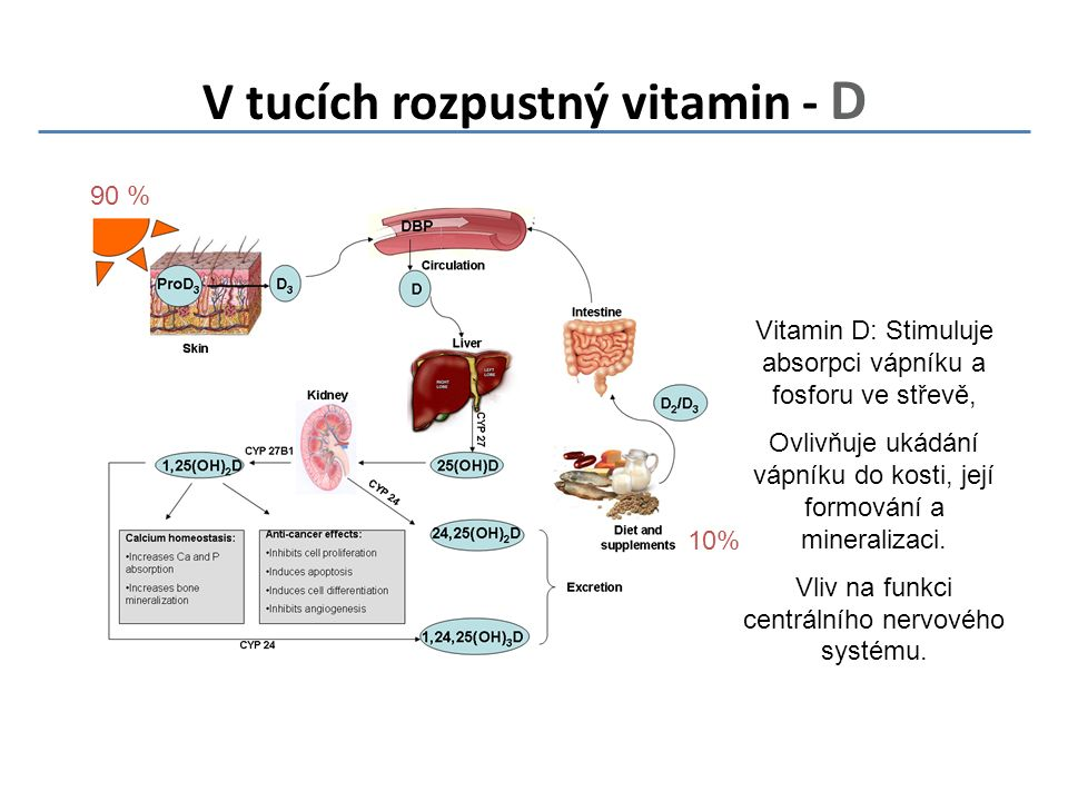 V tucích rozpustný vitamin - D 90 % 10% Vitamin D: Stimuluje absorpci vápníku a fosforu ve střevě, Ovlivňuje ukádání vápníku do kosti, její formování a mineralizaci.
