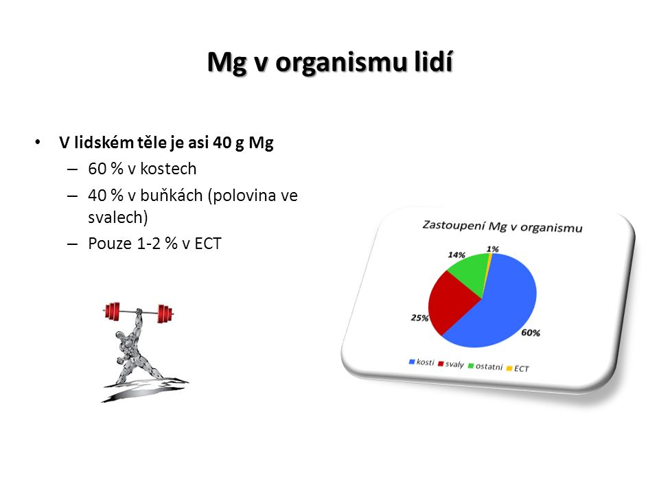 Mg v organismu lidí V lidském těle je asi 40 g Mg – 60 % v kostech – 40 % v buňkách (polovina ve svalech) – Pouze 1-2 % v ECT