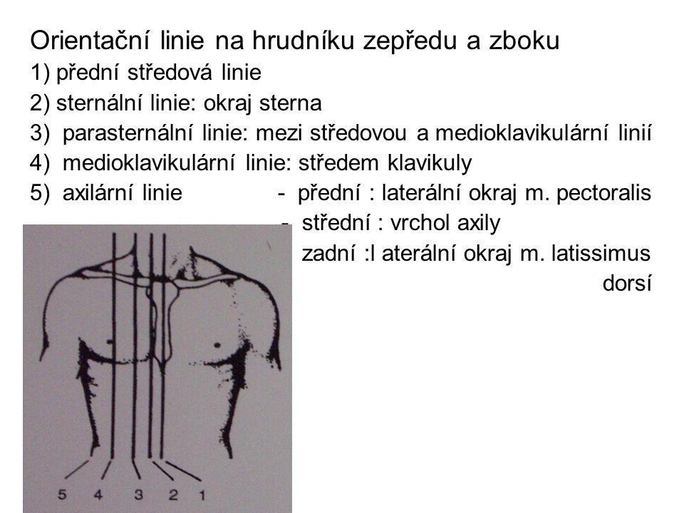 Orientační linie na hrudníku zepředu a zboku 1) přední středová linie 2) sternální linie: okraj sterna 3) parasternální linie: mezi středovou a mediok