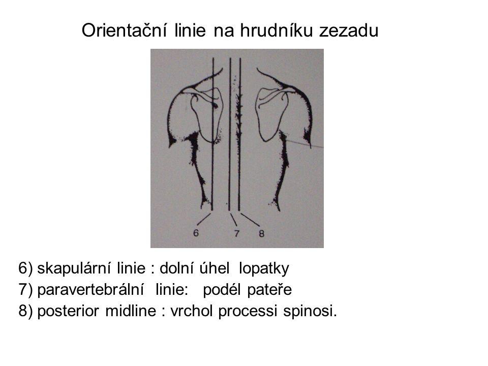 Orientační linie na hrudníku zezadu 6) skapulární linie : dolní úhel lopatky 7) paravertebrální linie: podél pateře 8) posterior midline : vrchol proc