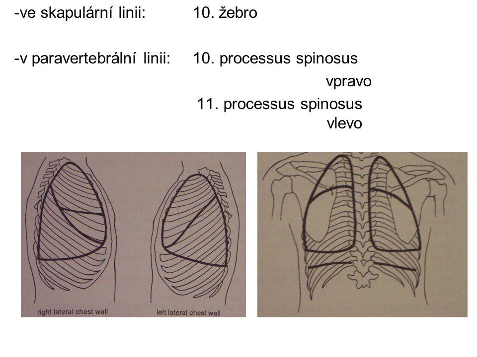 -ve skapulární linii: 10. žebro -v paravertebrální linii: 10. processus spinosus vpravo 11. processus spinosus vlevo
