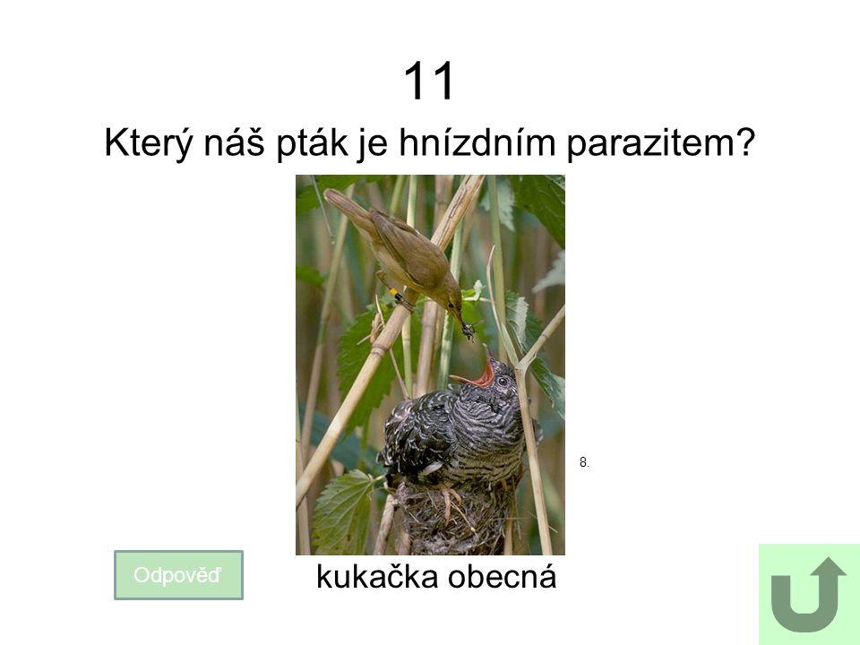 11 Který náš pták je hnízdním parazitem? Odpověď kukačka obecná 8.