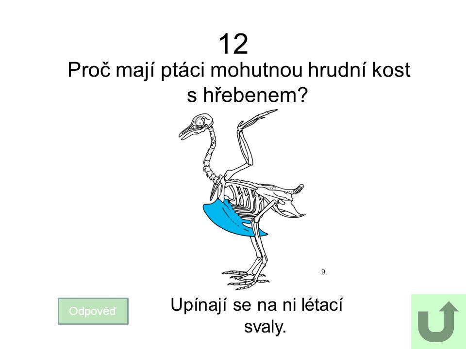 12 Proč mají ptáci mohutnou hrudní kost s hřebenem? Odpověď Upínají se na ni létací svaly. 9.