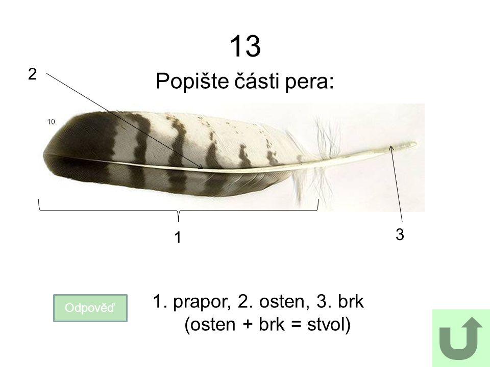 13 Popište části pera: Odpověď 1. prapor, 2. osten, 3. brk (osten + brk = stvol) 10. 1 2 3