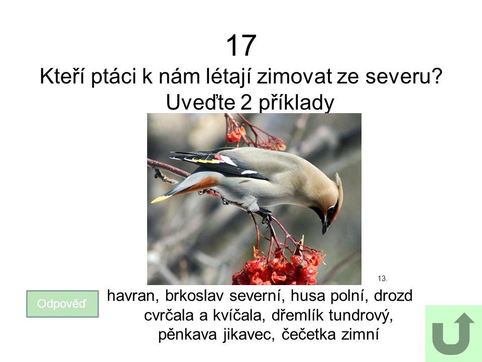 17 Kteří ptáci k nám létají zimovat ze severu? Uveďte 2 příklady 13. Odpověď havran, brkoslav severní, husa polní, drozd cvrčala a kvíčala, dřemlík tu
