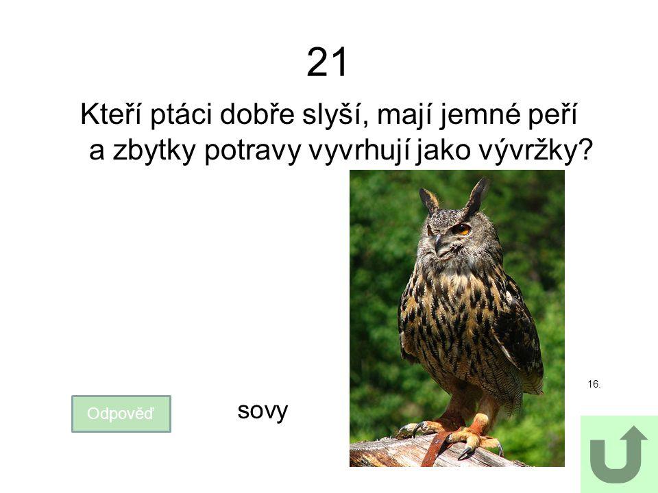 21 Kteří ptáci dobře slyší, mají jemné peří a zbytky potravy vyvrhují jako vývržky? Odpověď sovy 16.