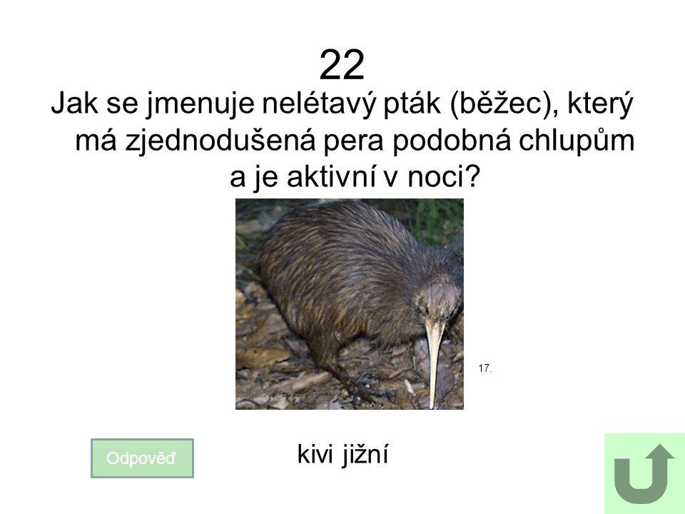 22 Jak se jmenuje nelétavý pták (běžec), který má zjednodušená pera podobná chlupům a je aktivní v noci? Odpověď kivi jižní 17.