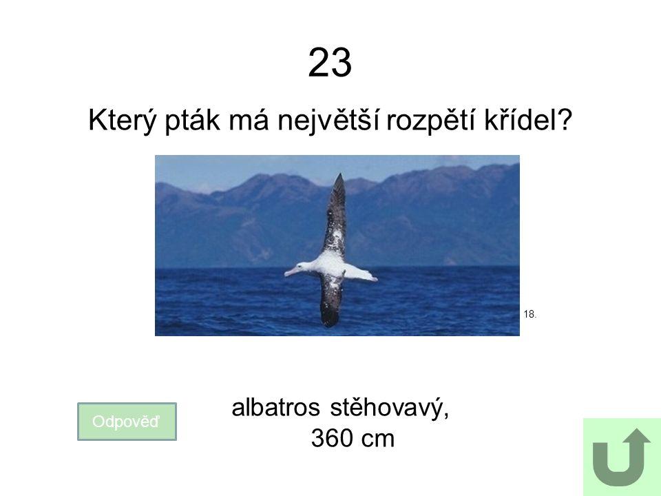 23 Který pták má největší rozpětí křídel? Odpověď albatros stěhovavý, 360 cm 18.