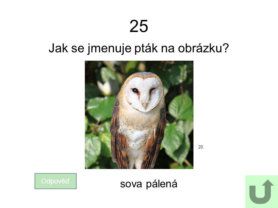 25 Jak se jmenuje pták na obrázku? Odpověď sova pálená 20.