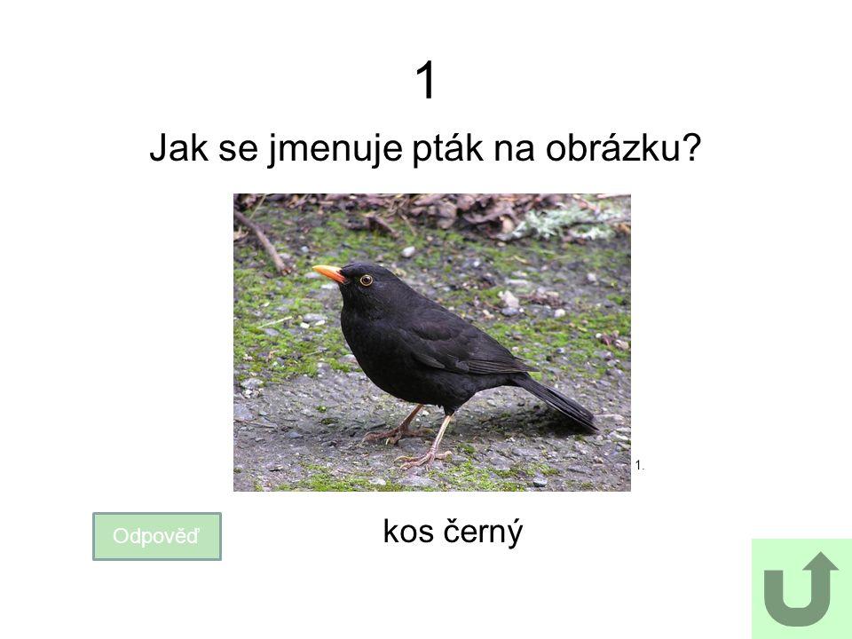 1 Jak se jmenuje pták na obrázku? Odpověď kos černý 1.