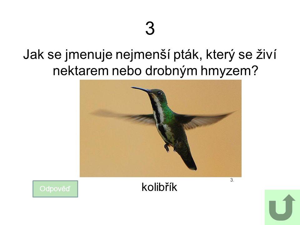 3 Jak se jmenuje nejmenší pták, který se živí nektarem nebo drobným hmyzem? Odpověď kolibřík 3.